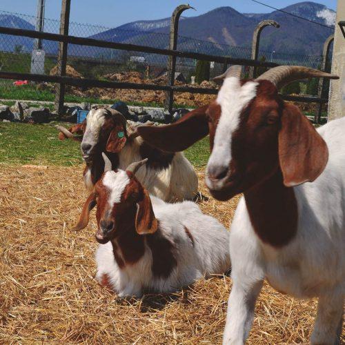 Zvieratká na ranči